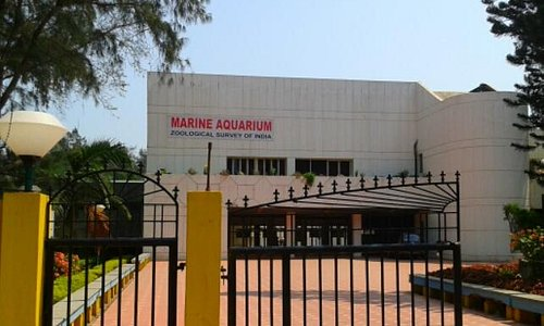 the marine aquarium in digha. it houses rare endemic marine species of bengal.an absolute great