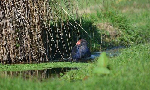 Te Anau Wildlife Park 3