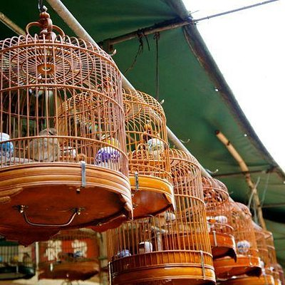 Birds for Sale