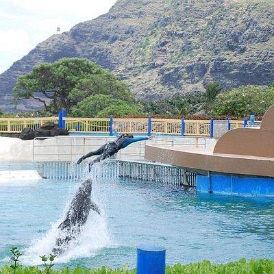 イルカのショー、バックはハワイの海と空