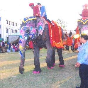 Elephant Polo in Jaipur