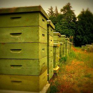 Tugwell Beehives