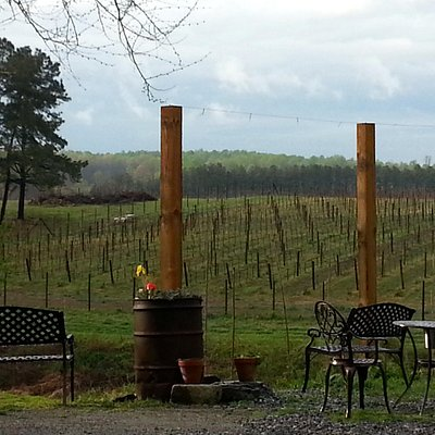 Beautiful view of the vineyard from the tasting room