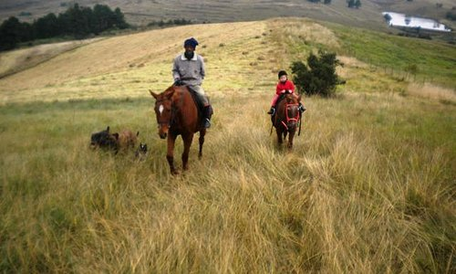 Outride on Kleinbosch Estate, the guide was Lucky. He knew enough basic English to answer our qu