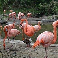 ZOO Ostrava flamingos