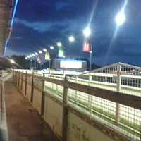 Romford greyhounds