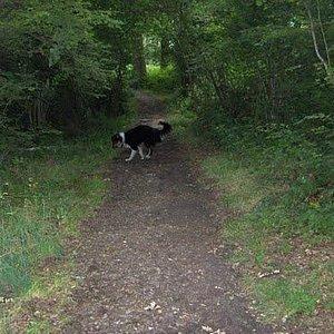 Hillingdon Trail