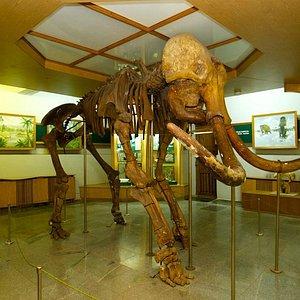 Zhytomyr Nature Museum: relics