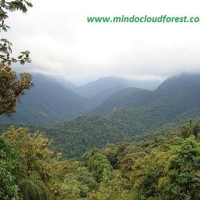 Mindo Cloud forest Ecuador