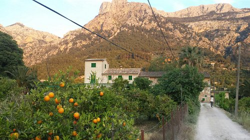 Farmhouse,  orange grove, and majestic mountains of Mallorca as seen approaching Ecovinyassa.