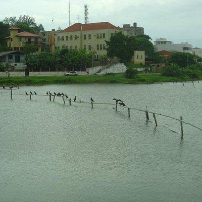 Pássaros na lagoa do Violão