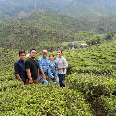 The tea plantation at Cameron Highlands