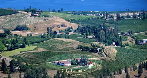 An aerial photo of Dirty Laundry Vineyard