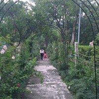 Rose gardens area
