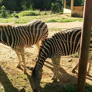 Espaço das zebras