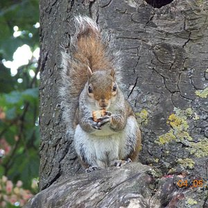 A squirrel we had just hand fed eating :)