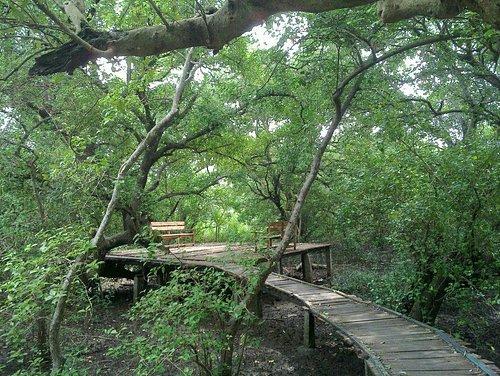 Coringa Wild Life Sanctuary