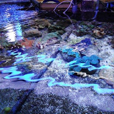 Kijkje in het Aquarium .