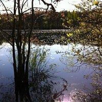 Bennett Pond