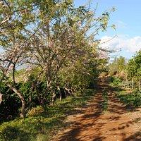 Kupa'a Farms