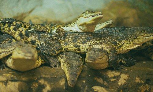 Ялтинский крокодилляриум