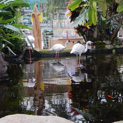 Flamingoes and massive Koi with parrots overhead