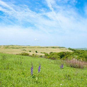 View of the prairie and the blue sky