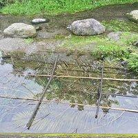 原住民朋友超自然不傷害環境的捕魚方式