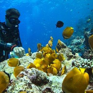 Butterfly Fish (image by Aaron Gekoski: www.aarongekoski.com)