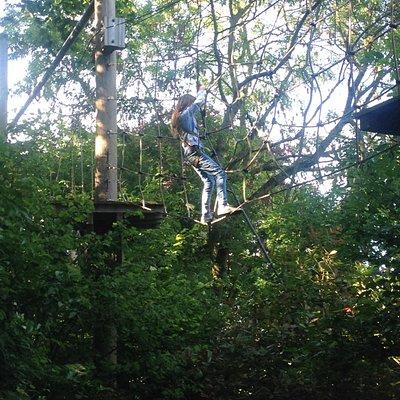 Fun in the treetops