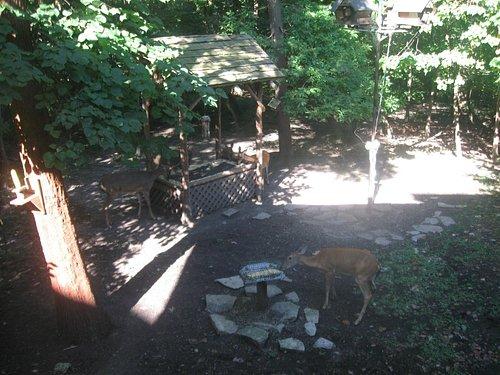 Deer & bird viewing