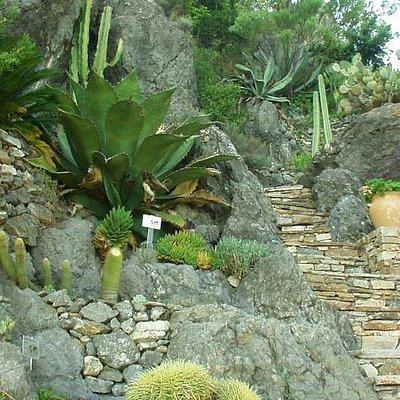 Succulents at the Mediterranean Garden in Roquebrun