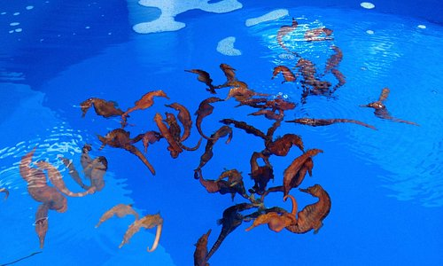 seahorses in their growing tanks - categorized by age