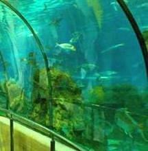 Foto del acuario