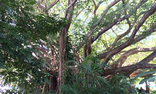 Townsville Botanic Gardens- check out the great herb garden