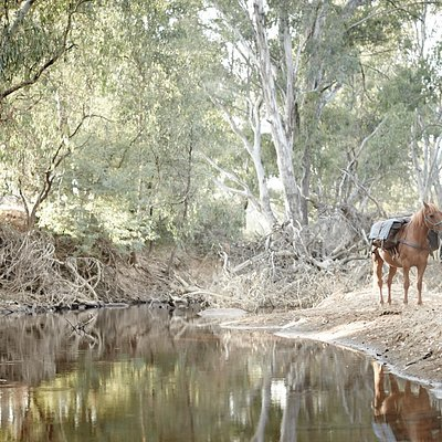 Riding beside the King River