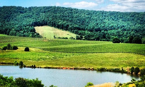 Trump Winery Pond View