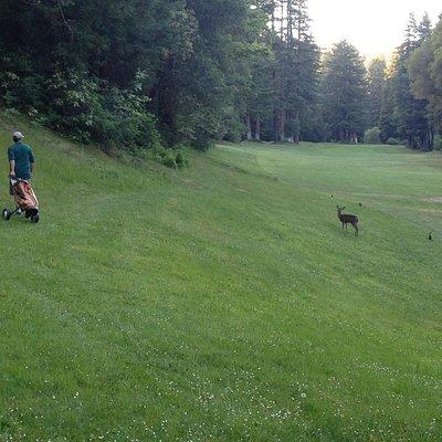 Bambi says please play through....