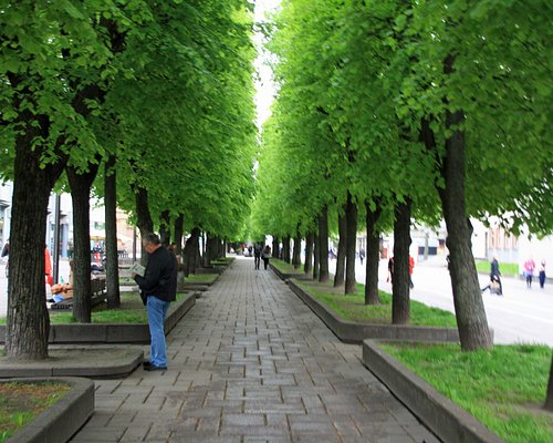 Trees in centre of street