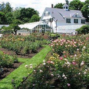 Rose gardens ablaze in vibrant colors!