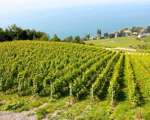 the vineyards of Domaine du Daley