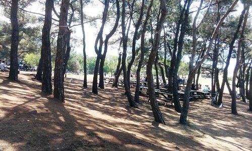 piknik alanı