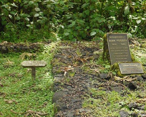 tumba da pesquisadora Dian Fossey (e do gorila Digit)