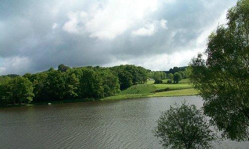 Корровы на озере Lac du Tolerme
