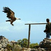 Pokaz tresury dzikich ptaków