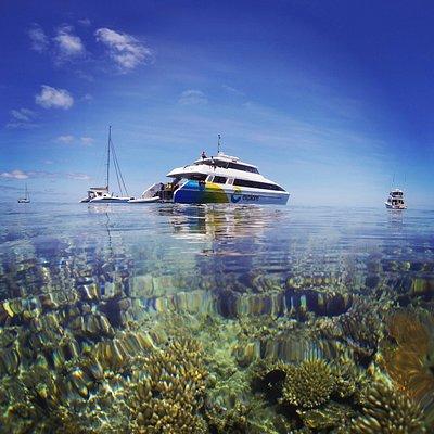 Reef Explorer at Bait Reef