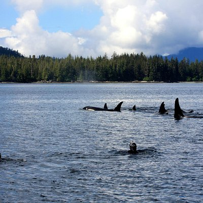 Where else can you snorkel with Orcas?