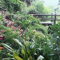 Il giardino della valle nel mese di giugno