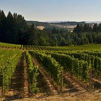 Utopia Estate Vineyard