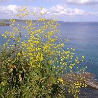 View across Gerrans Bay from the Atlantic Fryer